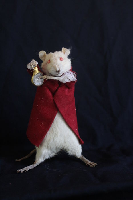 "Taxidermy ""Time-piece Rat"" - Rattus norvegicus - 17 cm"
