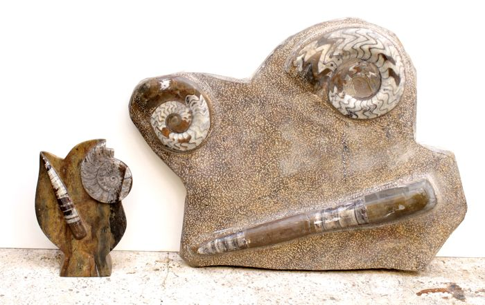 Polished matrix with Orthoceras and Ammonites - 20 and 44 cm (2)