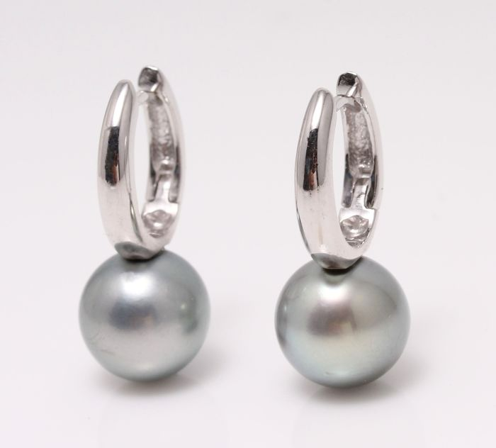 NO RESERVE PRICE - 14 kt. White Gold - 11x12mm Round Tahitian Pearls - Earrings