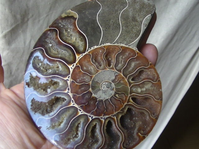 Ammonite, 240 g - 130 x 100 x 16 mm