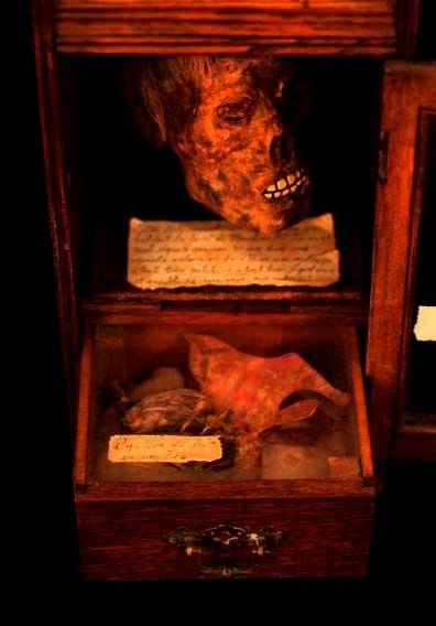 """Mythical Tyanak Mummified Head with """"Night Fairy"""" - in memorial casket - 32cm"""