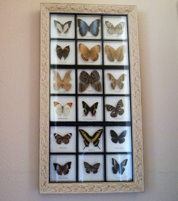Exotic Butterfly collection in fine frame - various named species - 87 x 46,5 cm.