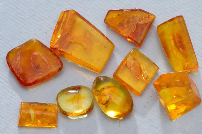 Polished Baltic Amber cabochons with large inclusions - spider,fly and others - 10 to 15mm  (9)
