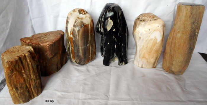 Nice collection of Petrified Wood - 105 to 190 mm - 7,2 kg  (6)
