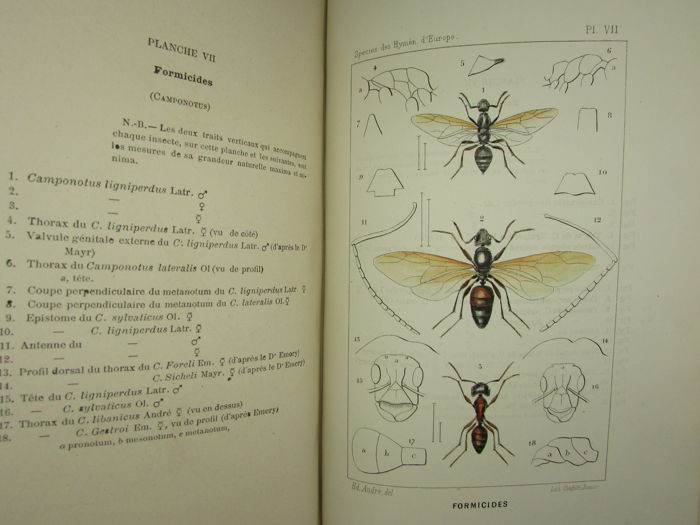 Ed. Andre - Species des Hymenopteres d'Europe & d'Algerie - 1879/1881