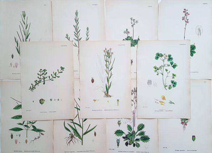11x  by an unknown artist (19th century) -  Various plants  - handcoloured
