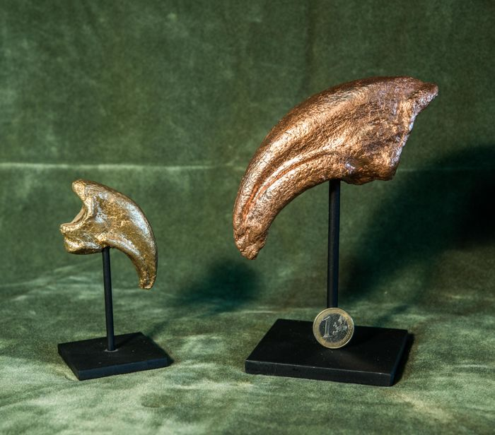 Tyrannosaurus rex - Foot and hand claw replicas on custom stands - 91 and 180 mm  (2)