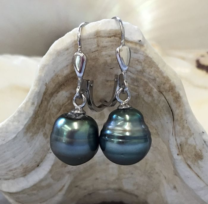 Pair of earrings in 925Silver Tahiti pearls Ø 10x11 mm - No Reserve Price