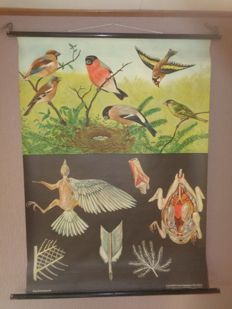 Beautiful school plate with birds Jung Koch Quentell - Linen