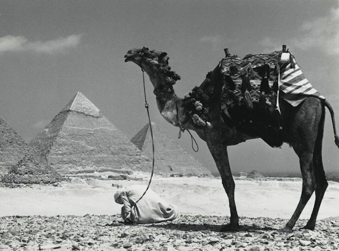 Kees Scherer (1920-1993)  - Cameleer near the pyramid of Cheops - Egypt 1968
