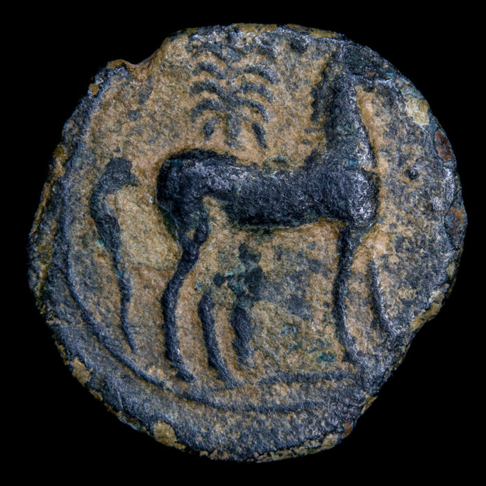 Spain - Ancient Hispania - 1/2 calco, Carthaginian occupation (238-208) - Carthaginians, horse and palm tree - bronze