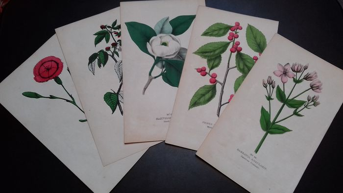 Good's Family Flora in Elizabethtown - 5 hand-watercolored botanical lithographs