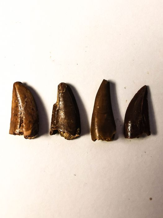 Set of Abelisaur Dinosaur Teeth (4)