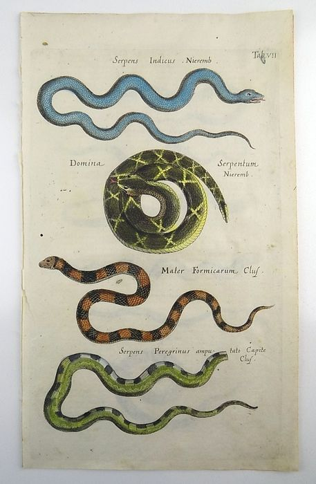 Set of 3 engravings by Matthäus Merian (1593-1650) - Reptiles: Snakes, Serpents - Folio hand coloured engraving - 1657