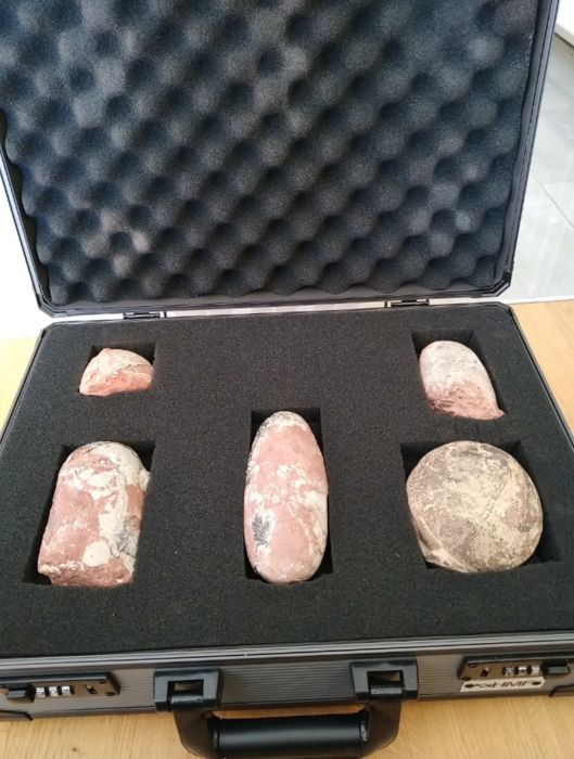 Fossil Dinosaur Egg Collection