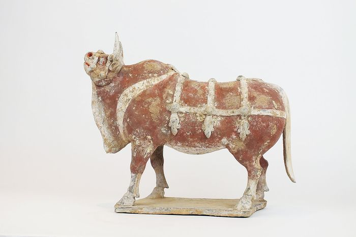 Mingqi - Terracotta - Very Large and Impressive Painted Gray Pottery Ox, with TL test, Width 41 cm. - China - Noordelijke Qi-dynastie (550 - 577 na Christus)