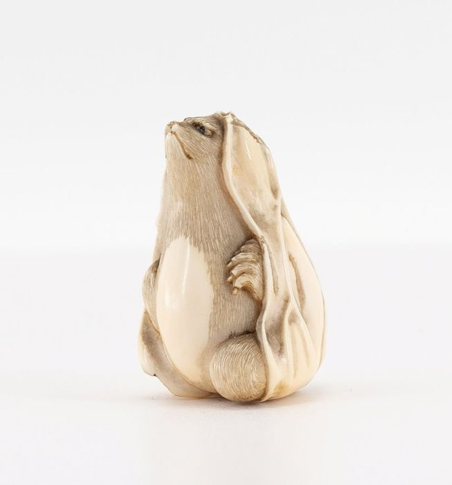 Netsuke - Ivory - Tanuki covered by his extended scrotum - Japan - Meiji period (1868-1912)