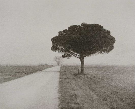 Domenico Foschi (1962-)  - Pine on Gravel Road, Ravenna, Italy - From the 'Lingering Past' series