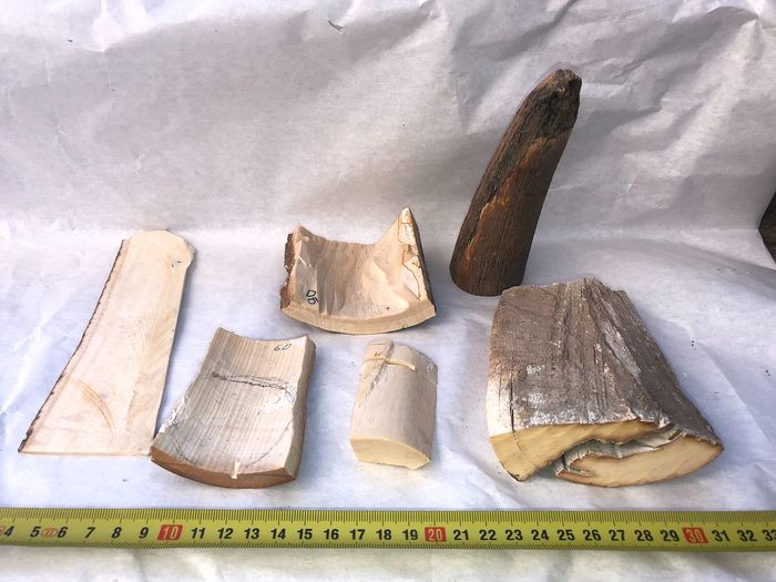 Woolly Mammoth - Tusk Bark pieces (6)