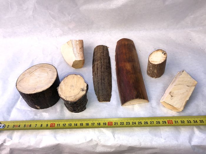 Woolly Mammoth - mixed Tusk slices - Mammuthus primigenius