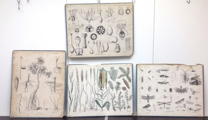 A Koot - Uitgeverij C. L Brinkman te Amsterdam - Small collection of 4 antique biology plates, 1 of which is hand-stained. (4) - Cardboard