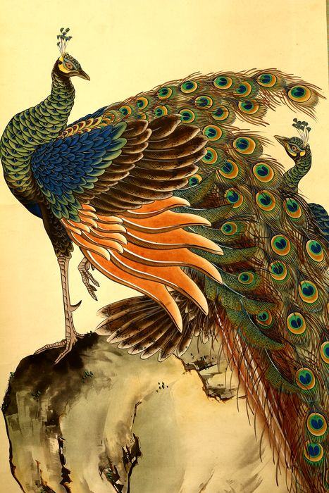 Rolschildering - Papier - Peacocks on rock - With signature and seal 'Setsudo' 雪堂 - Japan - 1920-40 (Taisho tot vroege Showa-periode)