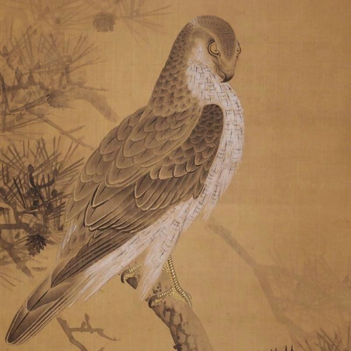 Hanging scroll - Silk - Hawk - With signature 'Kaido 介堂' - Japan - Early 20th century