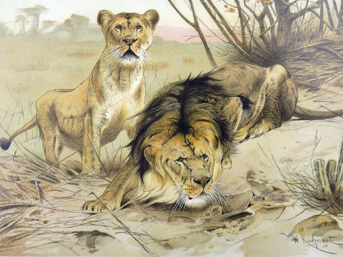 Wilhelm Kuhnert et. al. Lot of 15 fine chromolithographs - Mammals: Lions, Tigers, Panthers, Elephants, Walrus, Bats, Otter, etc.