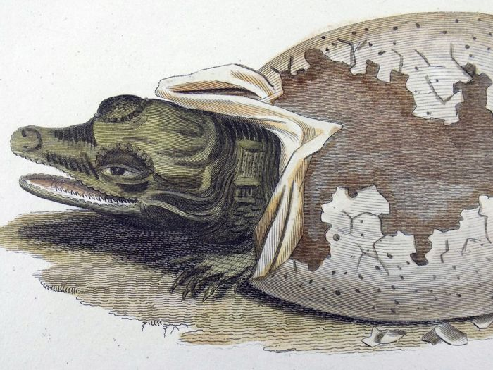 Lot of 7 engravings by George Shaw (1751-1813)  - hand colour - Reptiles and Amphibians - 1800