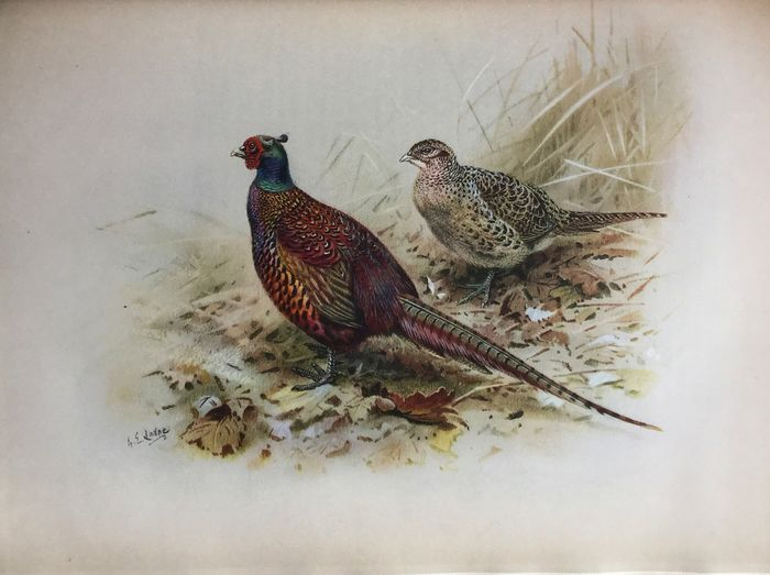 W.R. Ogilvie-Grant, Aymer Maxwell, J.G. Millais et al. - The Gun at Home and Abroad. British Game Birds and Wildfowl - 1912