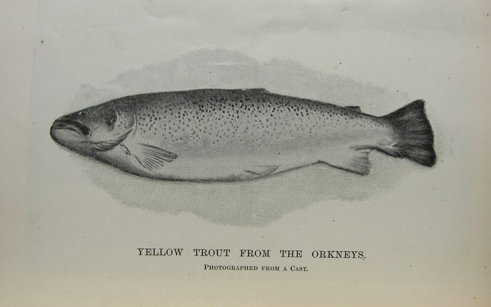 John Bickerdyke - Angling in Salt Water, Angling for Coarse Fish, Game Fish and Pike  - 1900