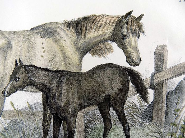 """Gottfried Honneger (18th/19th C. Early Swiss); Folio stone lithograph French mannier - """"Die Stute""""; Horses, Mares,  La Jument - Fine hand colour"""