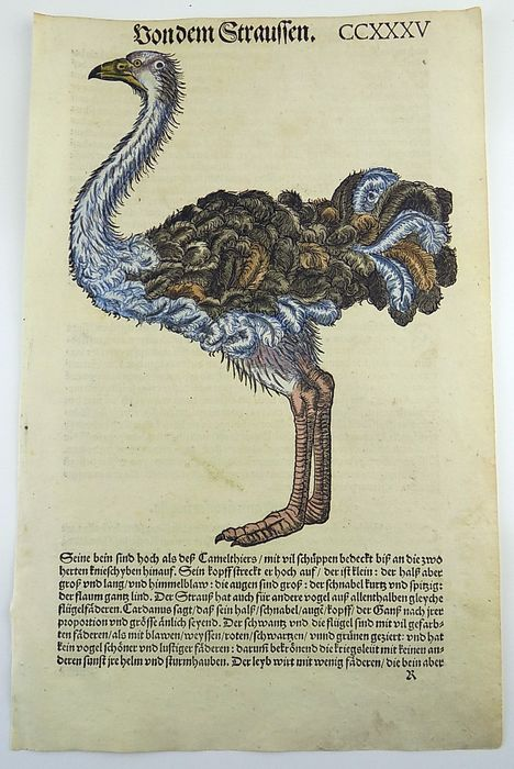 Gesner, Conrad 1516-1565 - Folio hand coloured woodcut - Ostrich - From the scarce First Edition of 1557