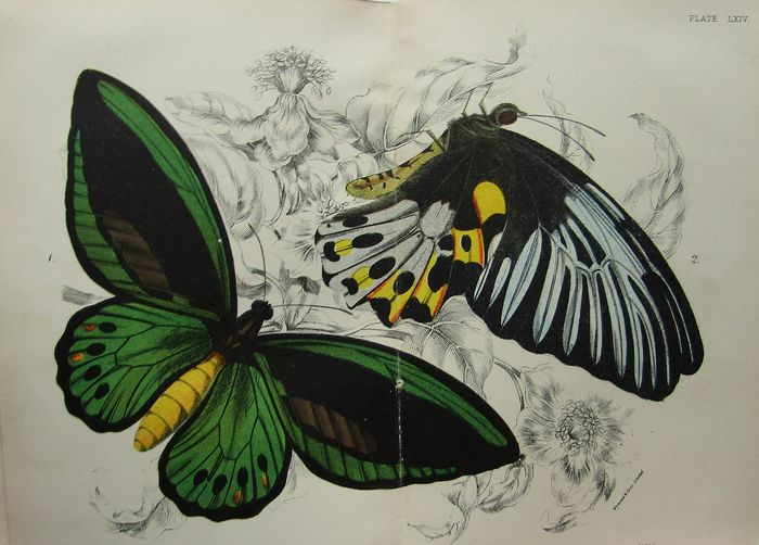 W. F. Kirby, F.L.S. - A Hand-Book of the Order Lepidoptera - 1896/1897