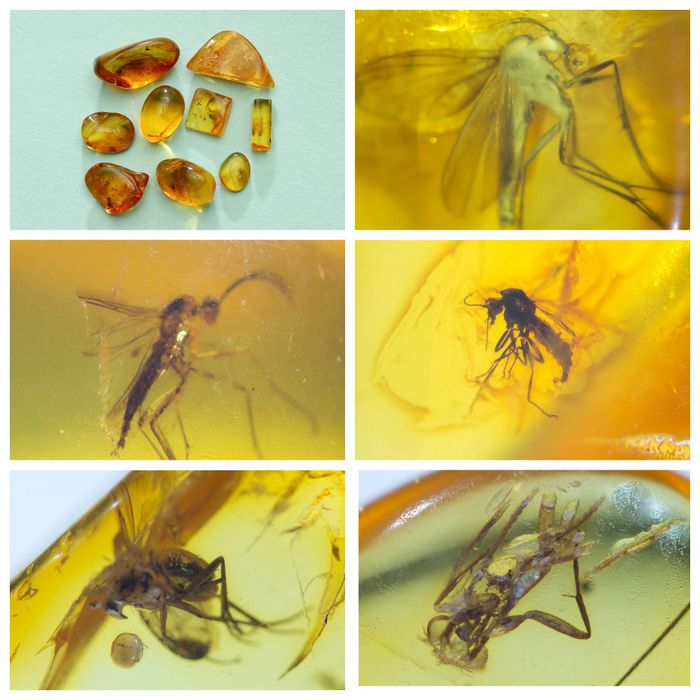 Amber - Polished Baltic Amber with inclusions, Diptera-fly - and other insects (9) - 6×10×13 mm