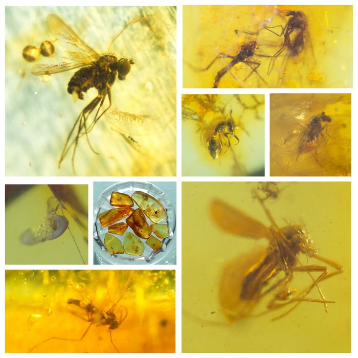 Amber - Polished Baltic Amber with inclusions, Diptera-fly - and other insects (9) - 8×13×22 mm
