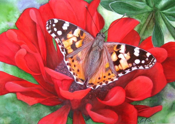 AniB - Painted Lady Butterfly / Distelfalter