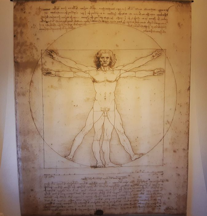 Anatomical model, Print, Tapestry (1) - Renaissance - Nylon - Second half 20th century