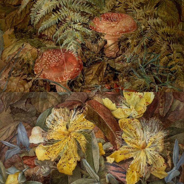 J. Grace (19th century) - Toadstools and St Johns Wort
