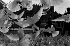 Teun Voeten (1961-) - People feeding doves at the Blue Mosque, Mazar-e-Sharif, Afghanistan,  1996