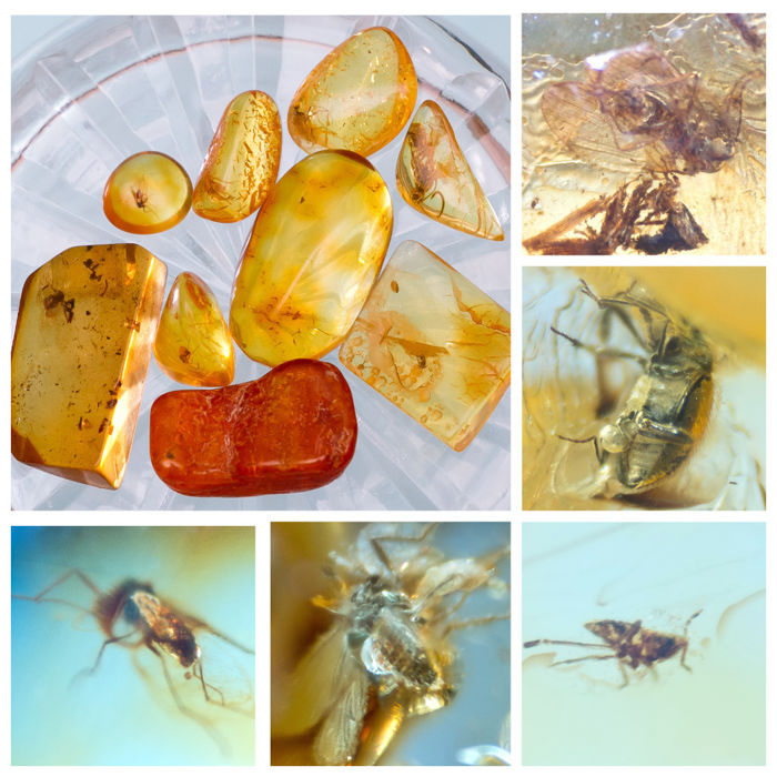 Amber - Polished Baltic Amber with inclusions, Diptera-fly - and other insects (9) - 6×12×18 mm