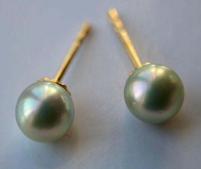 14 kt. Yellow gold - Earrings sea/salty Japanese Akoya pearls 4,8 mm
