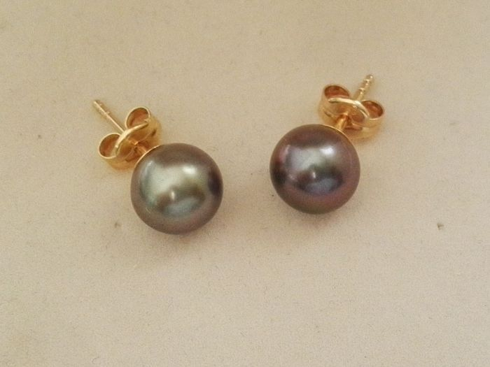 18 kt. 8 mm, Tahitian pearls - Earrings pearl