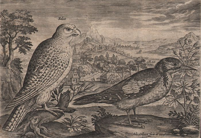 Ca. 1580 - Landscape with Hawk and Great Spotted Woodpecker