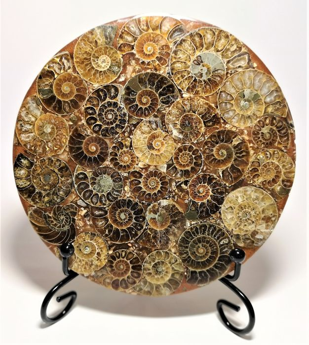 Large Ammonite composite disc - with stand - 119×119×6 mm