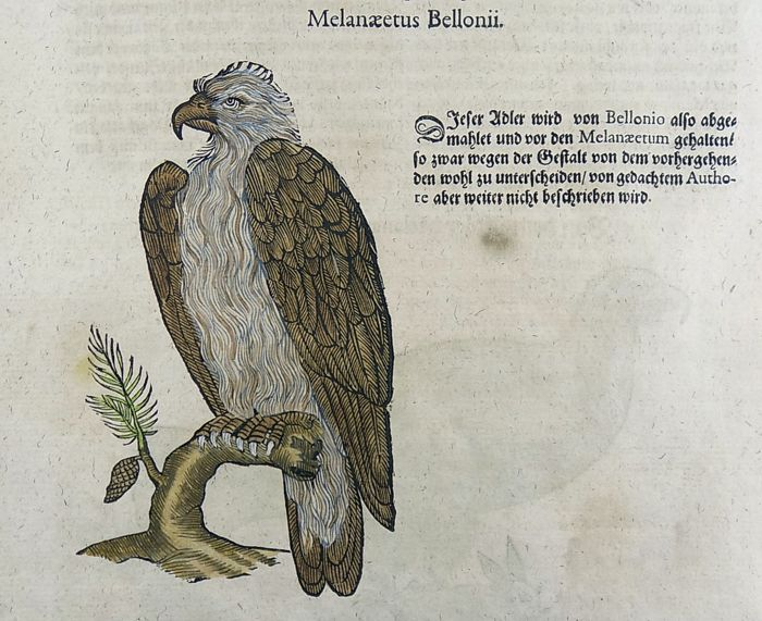 Conrad Gesner (1516-1565) - Folio with 2 woodcuts - Eagles - Hand coloured - 1669