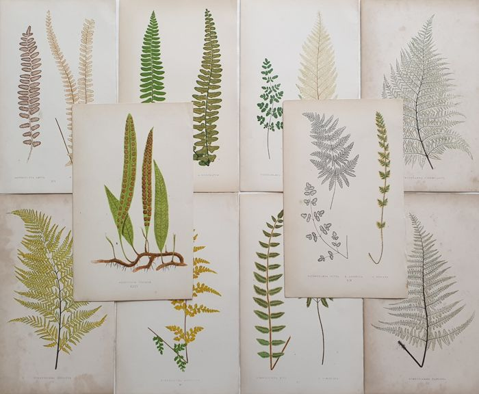 10 prints by Edward Joseph Lowe (1825-1900) - Collection Plants