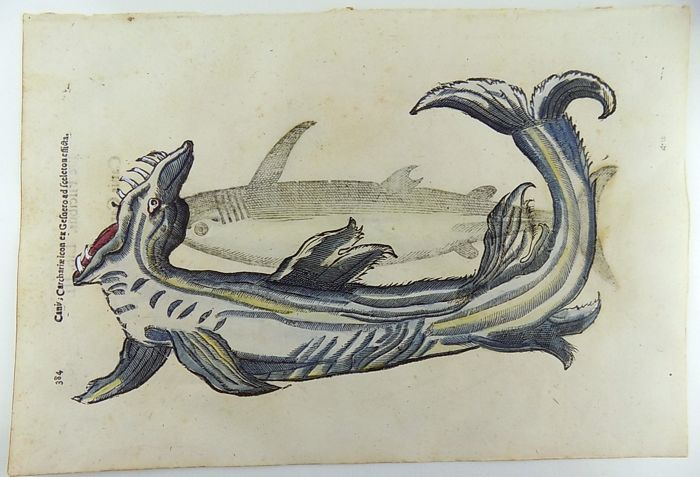 Cristoforo Coriolano b 1540; Aldrovandi - 2 Folio woodcuts on one leaf - Sharks - Sea Monster - Folio hand coloured woodcuts - 1638