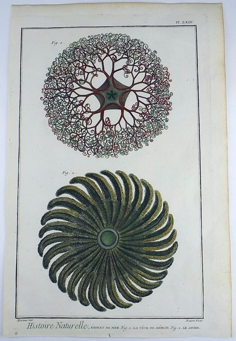 Francois Nicolas Martinet (b. 1731- c. 1804) Folio 38 cm - Sea Stars Medusa - Aquatic Marine - Hand coloured stone lithograph - 1780