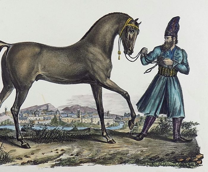 Karl Brodtmann (1787 - 1862) Folio 31.5 cm - Persian Horse - Hand coloured stone lithograph - 1830